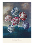 Group of Carnations