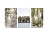 Winter Forest Triptych