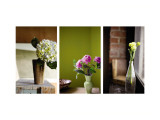Spring&#39;s Stems Triptych