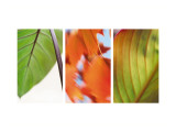 Leaves' Journey Triptych