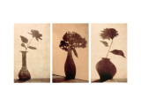 Floral Silhouettes Triptych