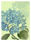 Hydrangea in Blue