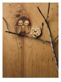Wood Owl Knots