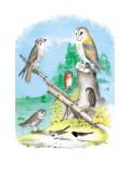 American Lanier Falcon