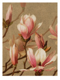 Pink Magnolia