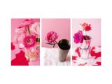 Pink Stems Triptych