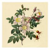 White Floral Illustration