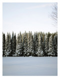 Winter Forest III