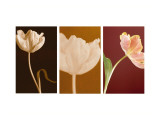 Dancing Tulips Triptych