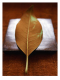 Sepia Leaf