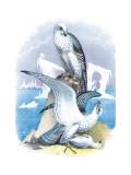 Jer-Falcon