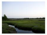 Marshland Rivulet