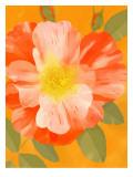 Wild Orange Rose