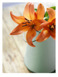 Orange Lilies in White Pail