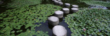 Water Lilies in a Pond  Helan Shrine  Kyoto  Japan