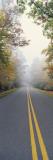 Leaves on Trees  Blue Ridge Parkway  North Carolina  USA