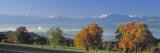 Pear Trees in the Swiss Midlands  Reusstal  Switzerland
