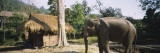 Elephant Standing Outside a Hut in a Village  Chiang Mai  Thailand