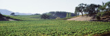 Vineyards  Napa Valley  California  USA
