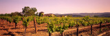 Sattui Winery  Napa Valley  California  USA