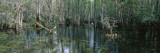 Water in the Dense Tropical Forest  Big Cypress National Preserve  Florida  USA