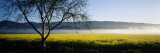 Fog over Crops in a Field  Napa Valley  California  USA