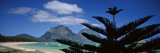 Panoramic View of a Coastline  Lord Howe Island  Australia