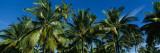 Palm Trees  Kauai  Hawaii  USA