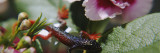 Salamander on Flowers