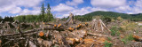 Deforestation in a Forest  Olympic National Park  Washington State  USA