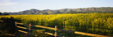 Crops in a Field  Napa Valley  California  USA