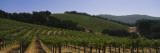 Vineyard on a Landscape  Napa Valley  California  USA