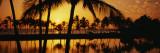 Silhouette of Palm Trees at Sunset  Anaeho Omalu Bay  Waikoloa  Hawaii  USA