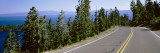 Pine Trees on Both Sides of Highway 89  Lake Tahoe  California  USA