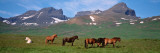 Horses Standing and Grazing in a Meadow  Borgarfjordur  Iceland