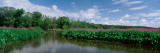Dense Foliage in a Marsh  Marsh Fishermen  Michigan  USA