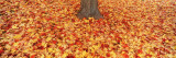Autumn Leaves near a Tree Trunk  Grand Rapids  Michigan  USA