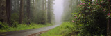 Empty Road Passing through a Forest  Redwood National Park  California  USA