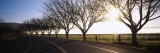 Trees along a Highway  Napa Valley  California  USA