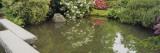 Reflection of Plants on Water  Kubota Gardens  Seattle  Washington State  USA