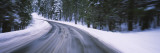 Road Passing through a Forest  Yosemite National Park  California  USA