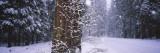 Snow Falling on the Road  Yosemite National Park  California  USA