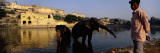 Two Elephants in Water  Amber Fort  Jaipur  Rajasthan  India