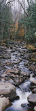 Water Flowing in the Forest  Adirondack Mountains  New York  USA