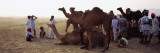 Group of People with Their Camels in a Fair  Pushkar Camel Fair  Pushkar  Rajasthan  India