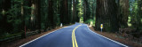 Road Winding Through Redwood Forest  Highway 101   California  USA