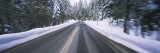 Trees with Snow on Both Sides of a Road  Yosemite National Park  California  USA