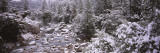 Snow Covered Trees along a River  Merced River  Yosemite National Park  California  USA