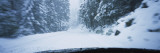 Trees along a Snow Covered Road  Yosemite National Park  California  USA