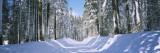 Snow Covered Road  Crane Flat  Yosemite National Park  California  USA